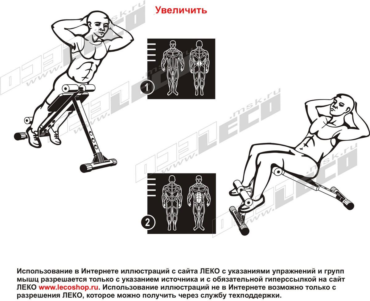 Размер скамьи для пресса и мышц спины своими руками